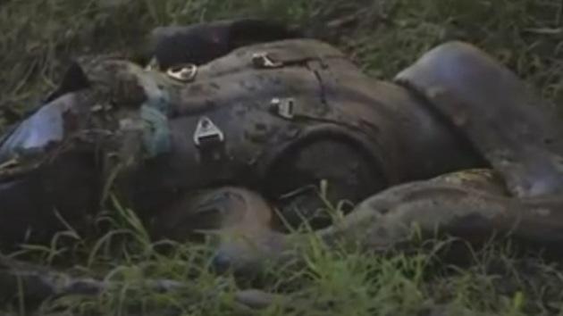 Fracasa proyecto, anaconda se niega tragarse a científico voluntario