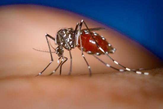 Taiwán alcanza un récord en casos de dengue y 42 muertos con el actual brote