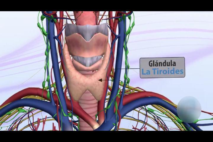 La tiroide: Causas, síntomas y tratamientos