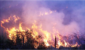 Tres reservas naturales de Puerto rico sufren daños por incendios forestales