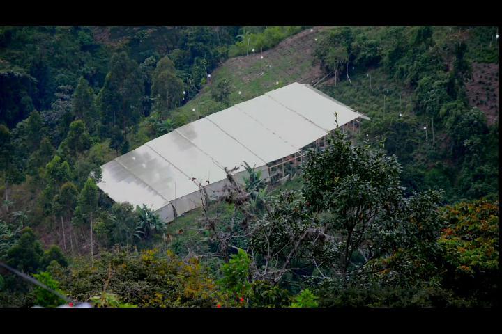 Conozca una ciudad colombiana cultivada de marihuana a la vista de todos