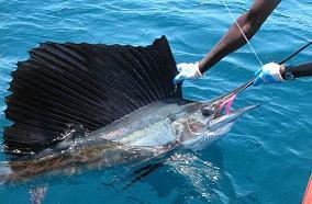 Unos 20 barcos de EEUU participarán en torneo de pesca