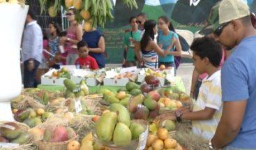 Sequía afecta producción de mangos en el país