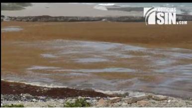 Experto descarta peces en Pedernales mueran por las algas marinas