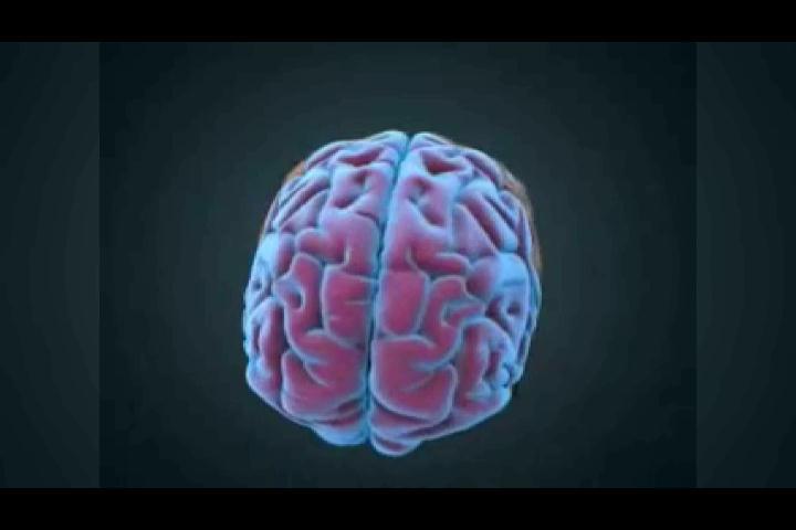 Conozca las diferentes funciones del cerebro