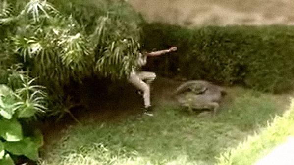 Adolescente se salva de las garras de un cocodrilo