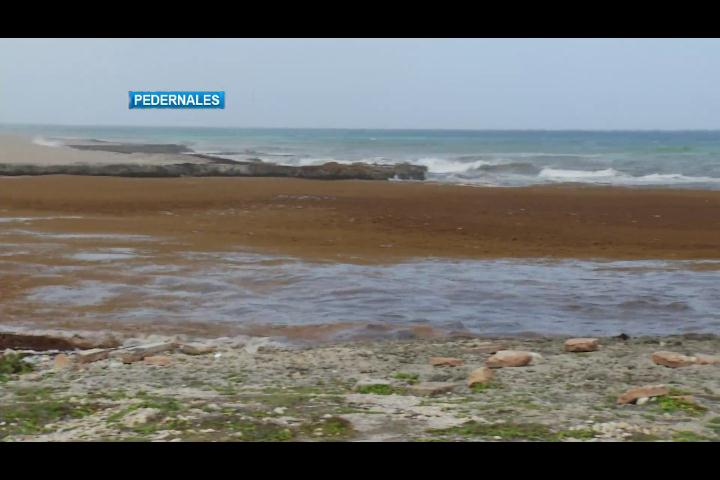 Preocupación en Pedernales por muertes de peces y algas en las playas