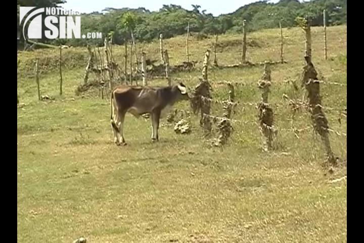 Sequía mantiene desesperado a los agricultores delValle en San Juan