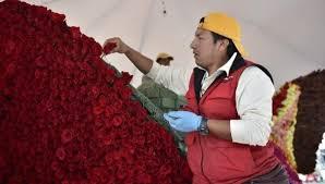 Unas 120 mil rosas adornan plazoleta de Palacio en Ecuador para recibir al Papa