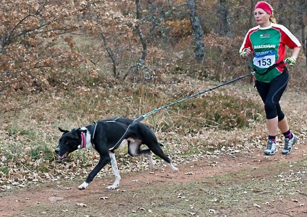 Utilizan perros para terapias de relajación de los atletas en Panamericanos