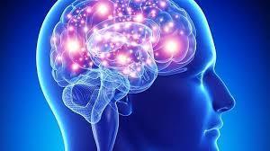Descubren nuevos conocimientos de cómo el cerebro forma los recuerdos