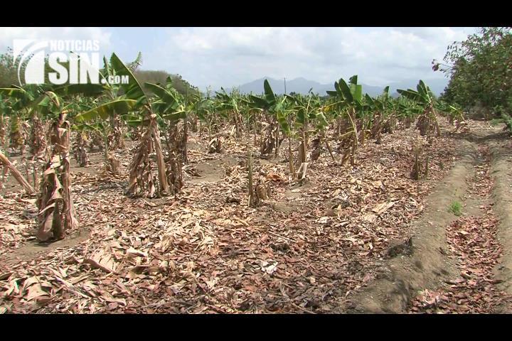 Autoridades preocupadas ante sequía continúa afectando al país