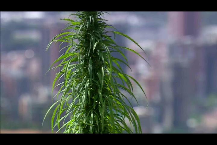 Apresan a dos hombres con 85 libras de marihuana