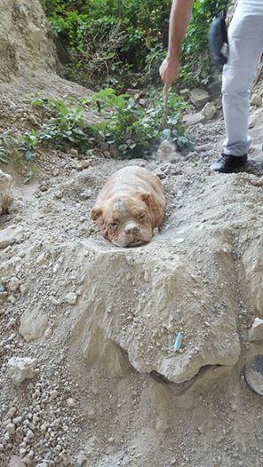 Piden pena máxima para hombre acusado de enterrar vivo a su perro