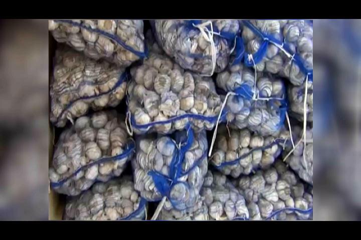 Decomisan 189 sacos de ajo de contrabando