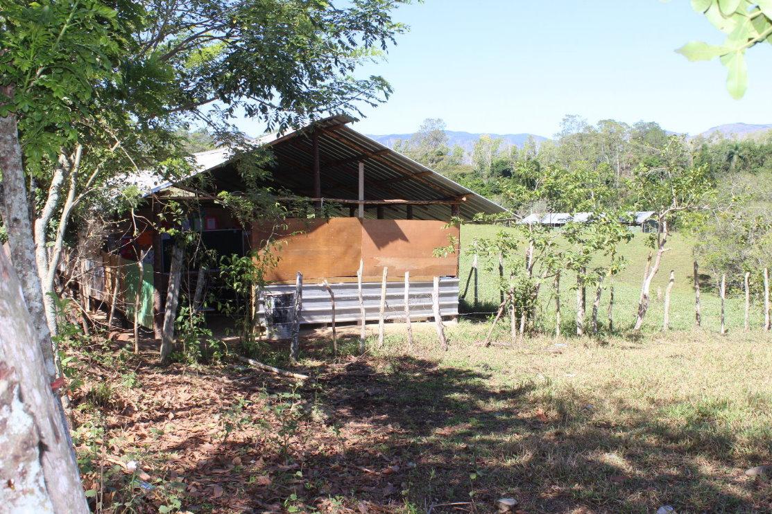 Niños reciben docencia en corral de vacas y otros animales en Jarabacoa