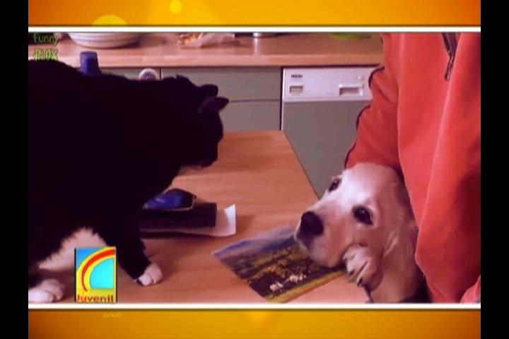 Conozca las pautas a seguir para que tu gato y cachorro convivan en harmonía