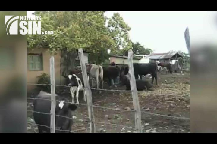 Mueren diez reses en hacienda en San Juan; piden investigación