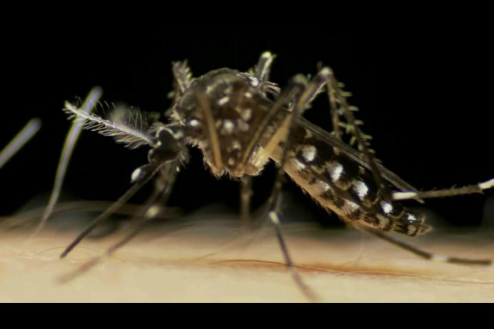 El Dengue: ¿Cuáles son sus síntomas y cómo prevenirlos?