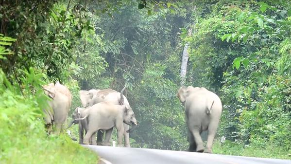 Motociclista intenta rebasar a elefantes y mire lo que le pasó