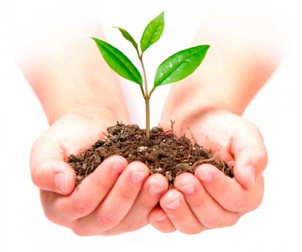 Fundación Sur Futuro gradúa 303 docentes y líderes en educación Ambiental