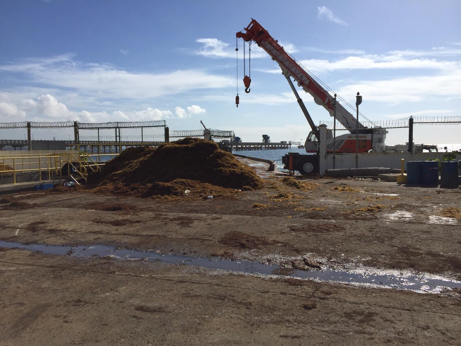 AES Dominicana revela está siendo afectadapor llegada masiva de algas