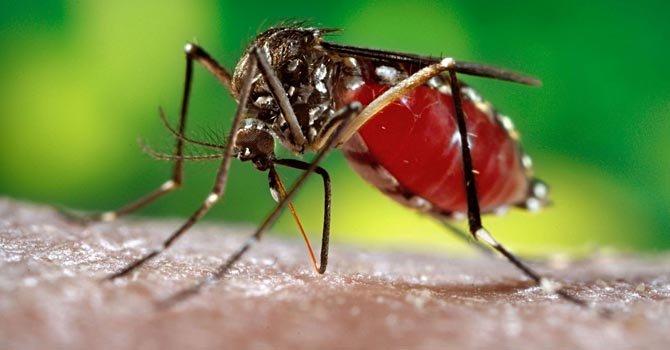 Cientos en jornada contra dengue en San Juan
