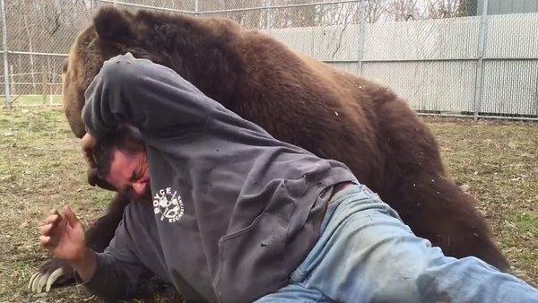 ¡Tierna amistad! Se acuesta con oso de 700 kilogramos, vea lo que pasó