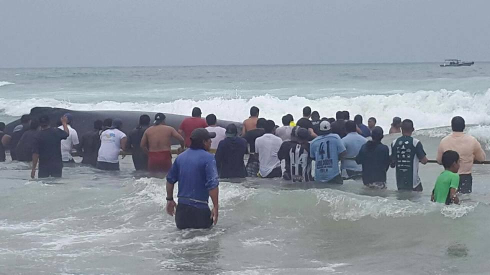 Un centenar de ballenas quedó varada en las playas brasileñas este año