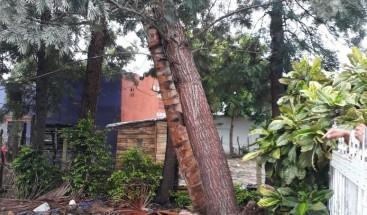 Vientos derriban árboles y tendido eléctrico en Villa Elisa, Montecristi