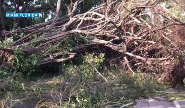 Huracán Irma deja 5.8 millones de personas sin energía eléctrica en  la Florida