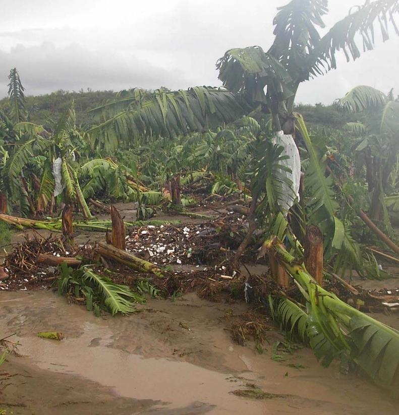 Lluvias vuelven a golpear agricultura en La Descubierta Constanza
