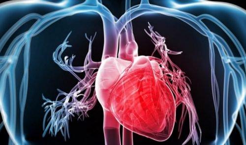 El corazón, la bomba del cuerpo