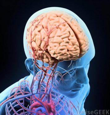 Descubren la zona del cerebro de pacientes con esquizofrenia que