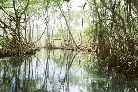 Ante amenaza de huracán: Medio Ambiente resalta importancia de los manglares