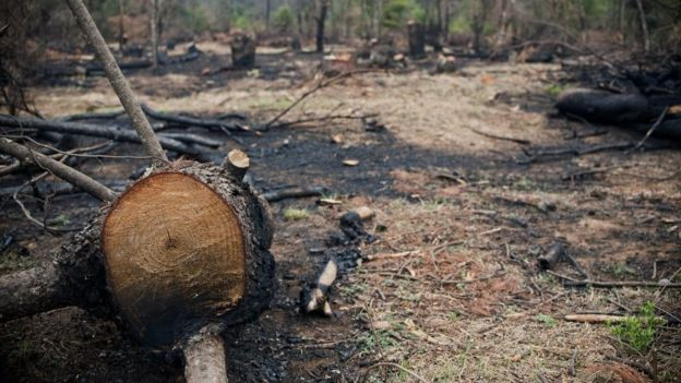 Pinos afectados por calentamiento global ponen en riesgo bosques mexicanos