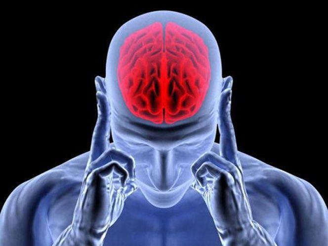 Cuestionan mecanismo por el que se cree que se forman y almacenan recuerdos