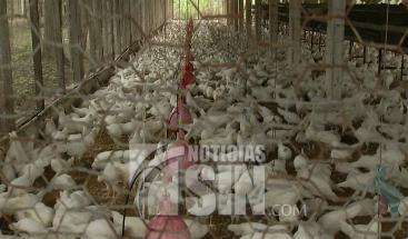 Informe sobre gripe aviar preocupa a consumidores en Moca