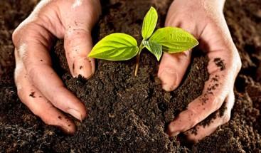 El suelo produce 95 % de los alimentos que consume el mundo, según expertos