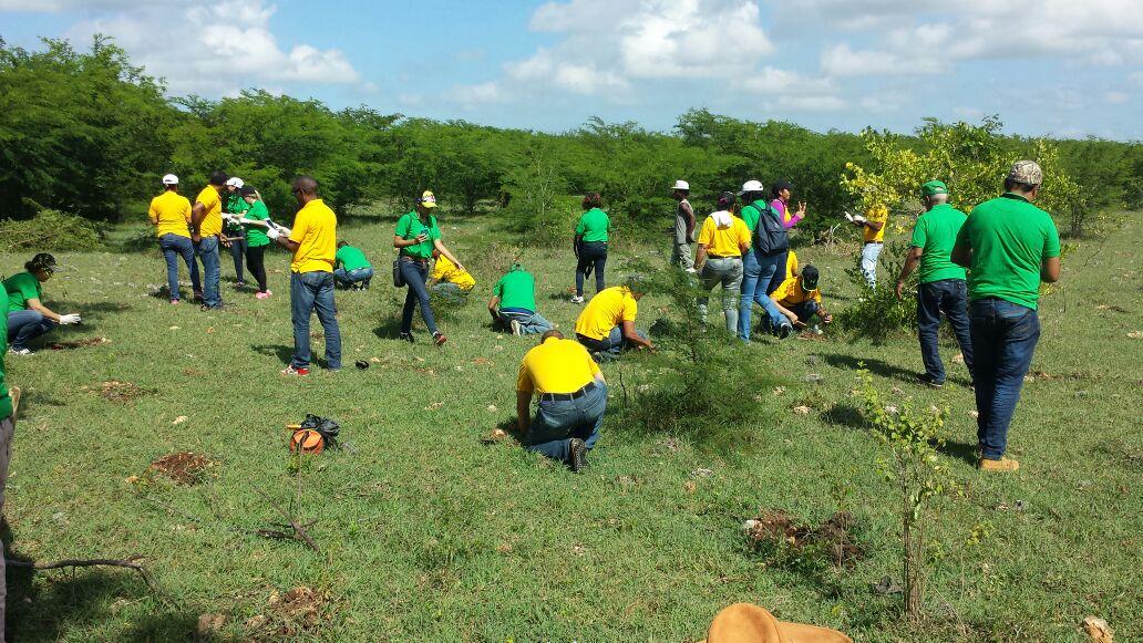 Medio Ambiente: Cientos de voluntarios se suman a jornadas de reforestación