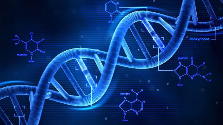 Cambios en ADN de animales domesticados afectarían el futuro de agricultura