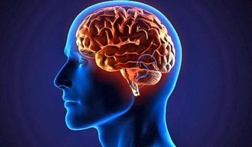 Sí, el cerebro es el órgano que da identidad a nuestra especie