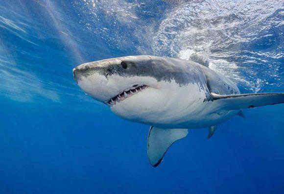 Un joven muere tras ser atacado por un tiburón en una playa del este de Cuba