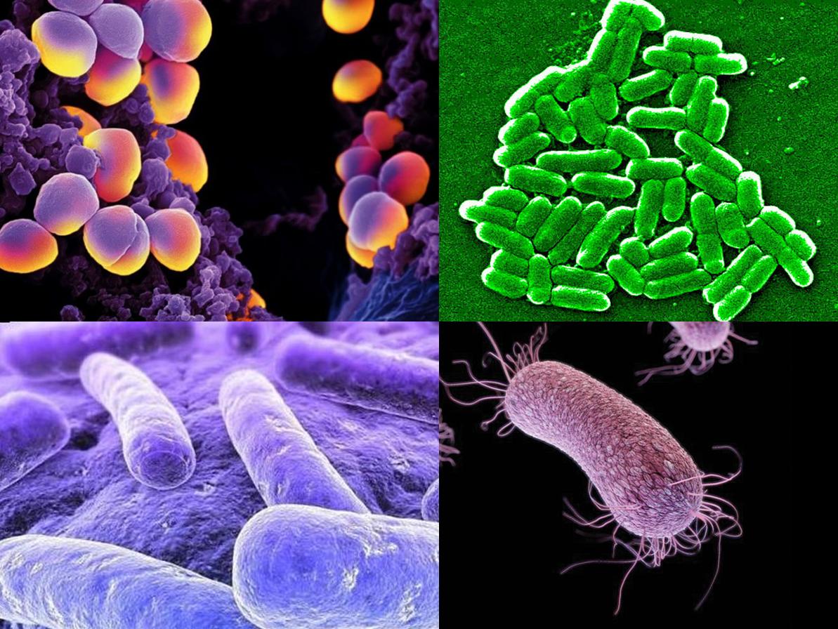 Identifican las cuatro superbacterias que más afectan a los latinoamericanos