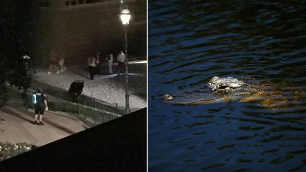 En 15 meses capturaron 95 caimanes en parque de Disney donde murió un menor