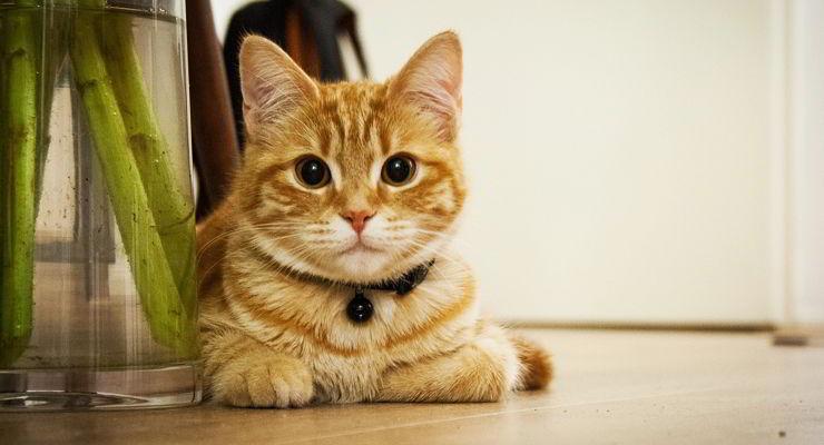 Mujer no podrá tener mascotas por un año luego de que provocara la muerte de su gato