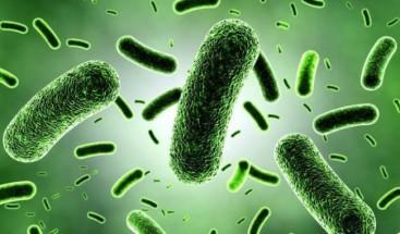 ¿Cuánto pesan los millones de microbios que viven en tu cuerpo?