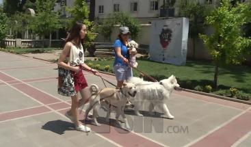 Tener mascotas en casas pequeñas y alimentar perros callejeros puede costar una multa en Chile