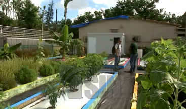 Iniciativa busca ayudar a sector agrícola de PR a raíz de estragos que dejó huracán María