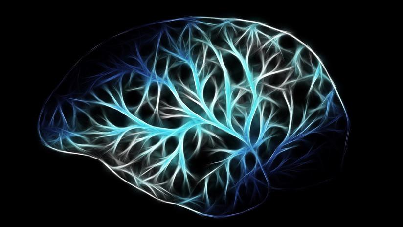Explican cómo envejece nuestro cerebro